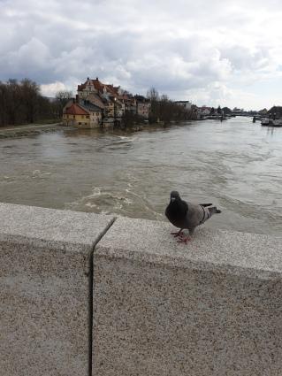 Steinerne Brücke mit Donauhochwasser